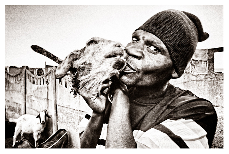 Sacrificial Goat at a graduation ceremony for African Healer
