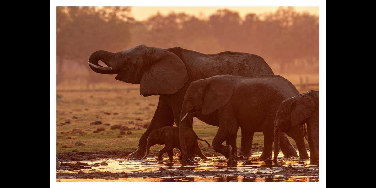 4 Generations of elephant in a single frame