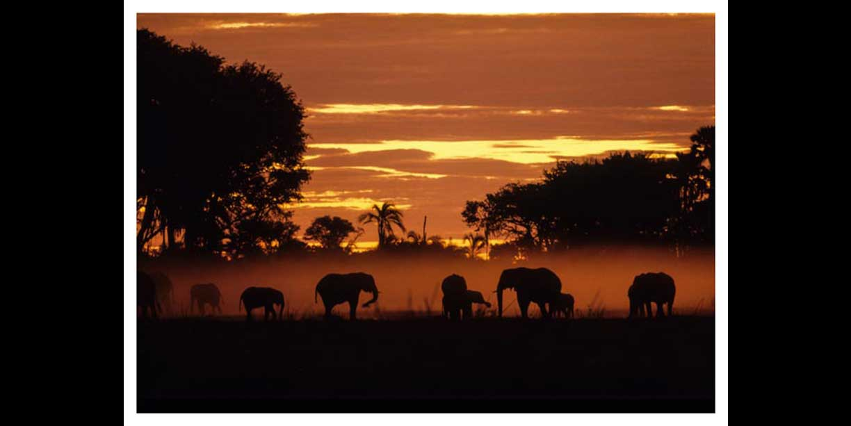 Dusty elephants at sunset