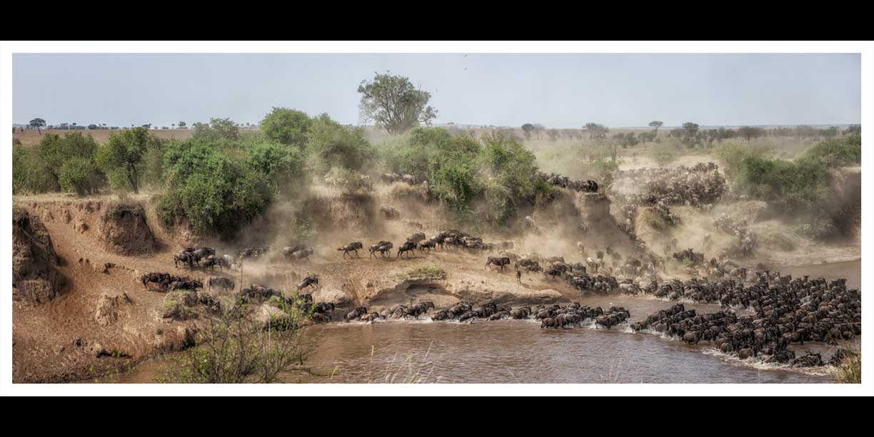 Wildebeest Migration in the Serengeti