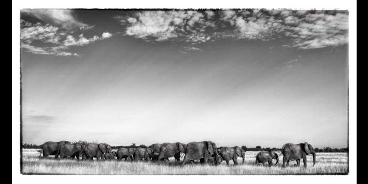 Elephant herd on the move under an African sky
