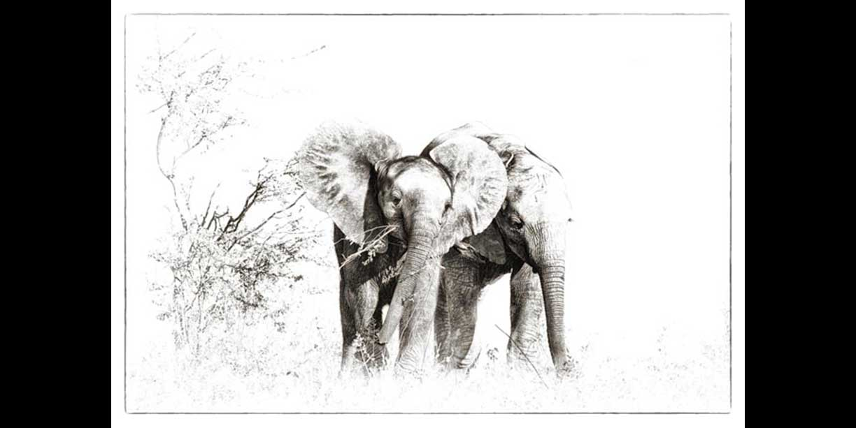 Two young elephants feeding
