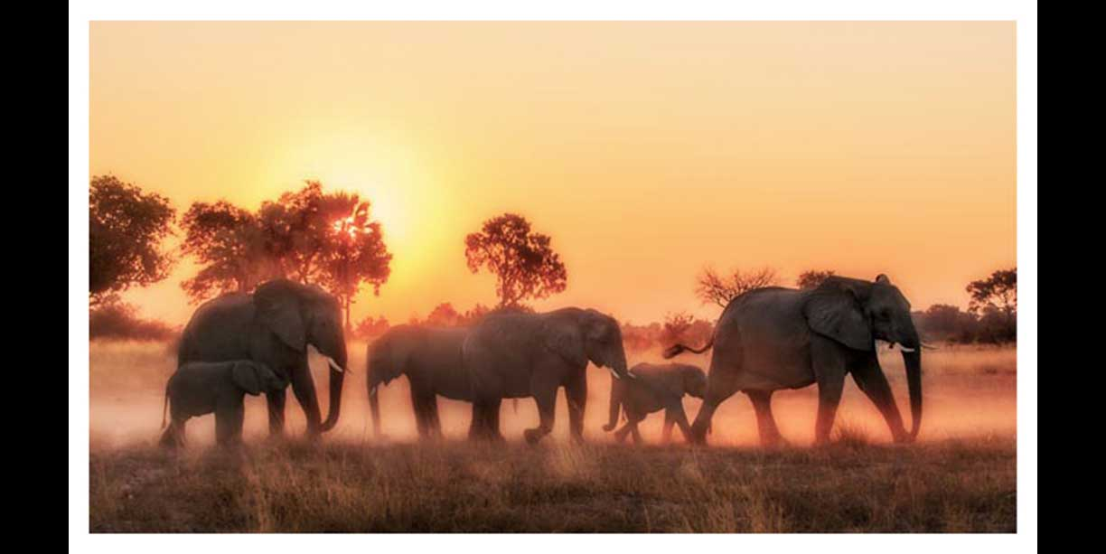 Elephant herd in dust at sunset