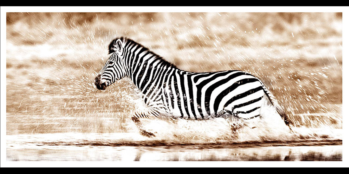 Zebra crossing water